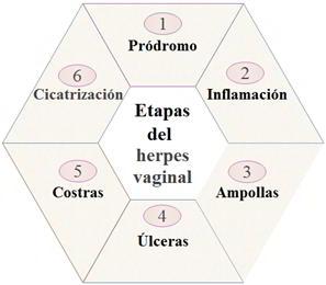 Etapas del herpes vaginal