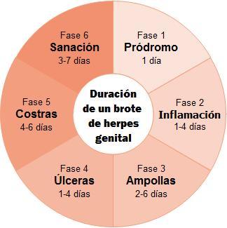 brote de herpes genital